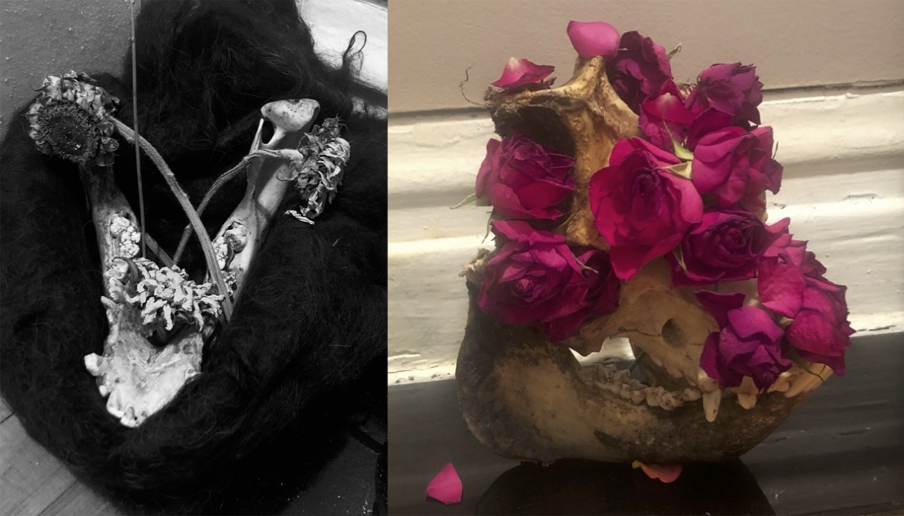 Two photographs of the pig skull, the left in black and white, both showing it with different ornamentations