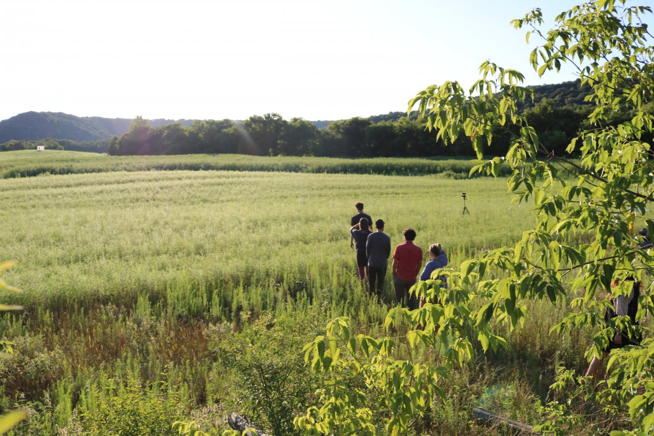 Group of artists talking a walk in a bright green field